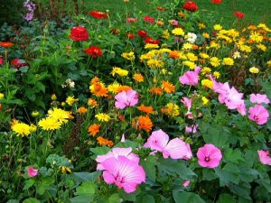 Bellas flower garden