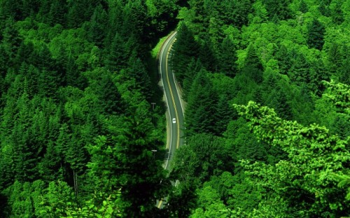 forest-road-700x437