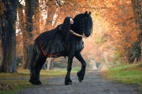 Az Horse