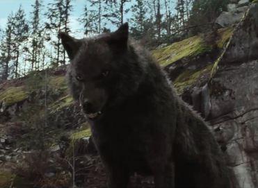 Sam as Wolf 1