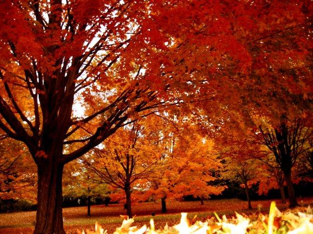 Autumn_in_Rain_in_Wicsonsin_4_3__soul-amp