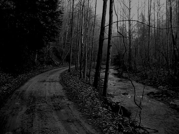 dark-road-in-the-woods